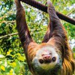 Costa-Rica-Natur